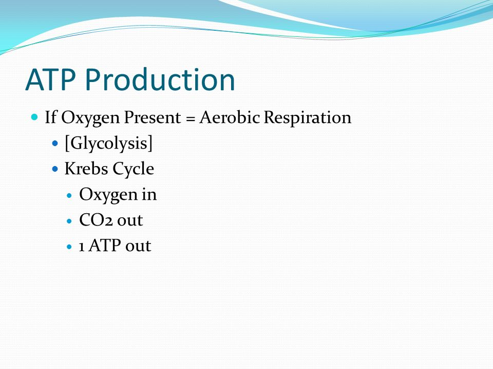 ATP Production If Oxygen Present = Aerobic Respiration [Glycolysis]